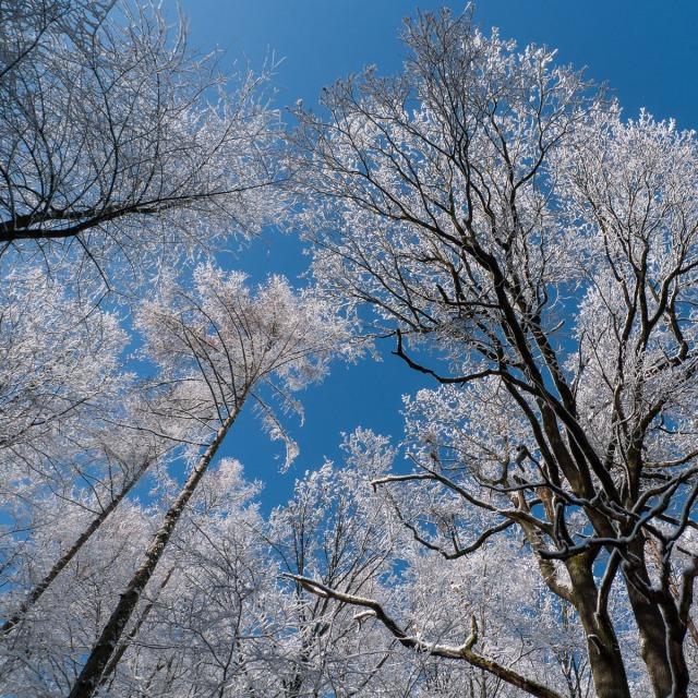2009-02-14 LX3 Wald im Schnee 013